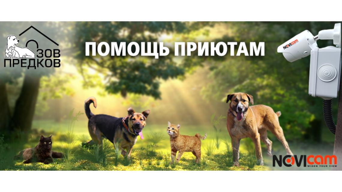 18 августа - День защиты бездомных животных